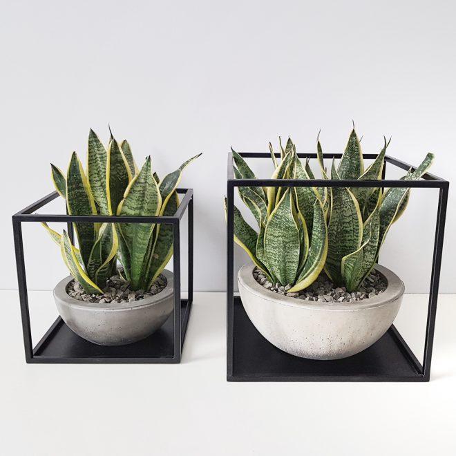 полки для рослин