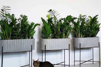 Готові рішення для озеленення інтерьеру