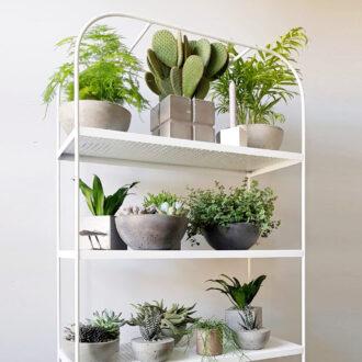 Готові рішення для озеленення